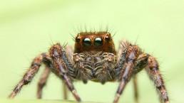 Im a Celeb Spider