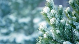 winter wonderland 4