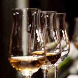 Virtual Wine Tasting Wines