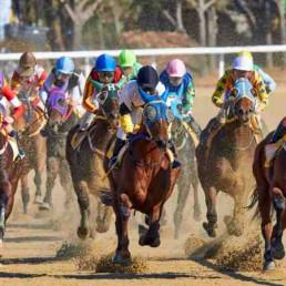 Virtual Horse Racing Horses