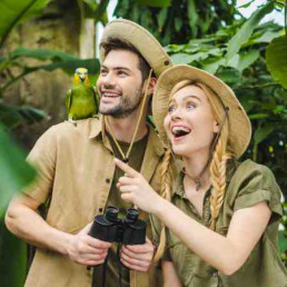 Virtual I'm a celebrity people in jungle
