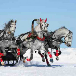 Virtual Christmas Party Horse Racing